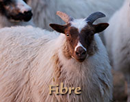 Fibre and Wool Products